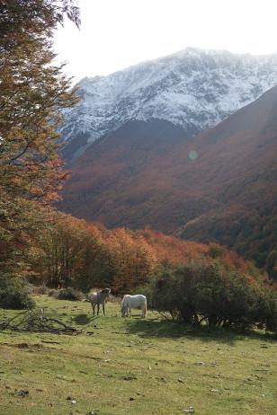 Wildpferde, Wanderung Cerro Castillo, Chile